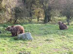 Brown Bears at Whipsnade Zoo