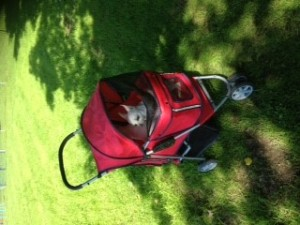 Lily in pushchair